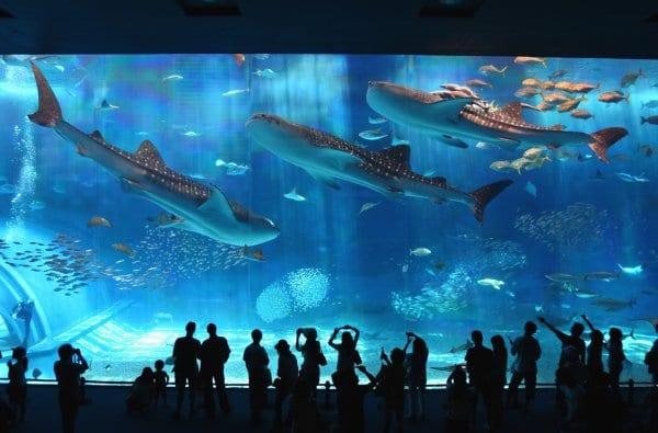 P Bus Aquarium (1)