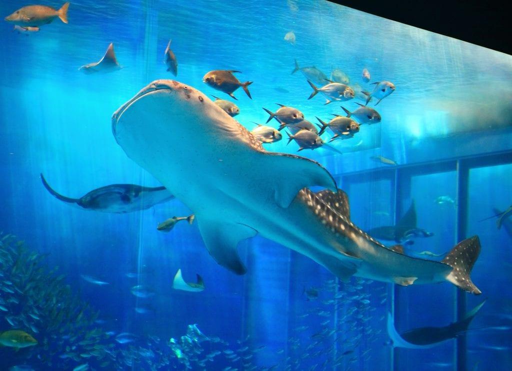 P Bus Aquarium (3)