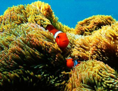 P Manzamo Snorkeling (6)